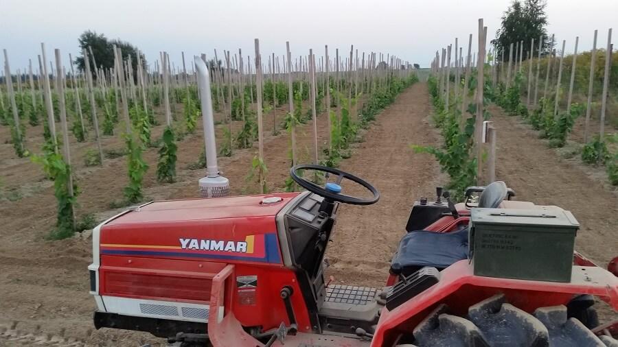 winnica, uprawa, pole, traktor, winogrona towarowa, wino, winorośl