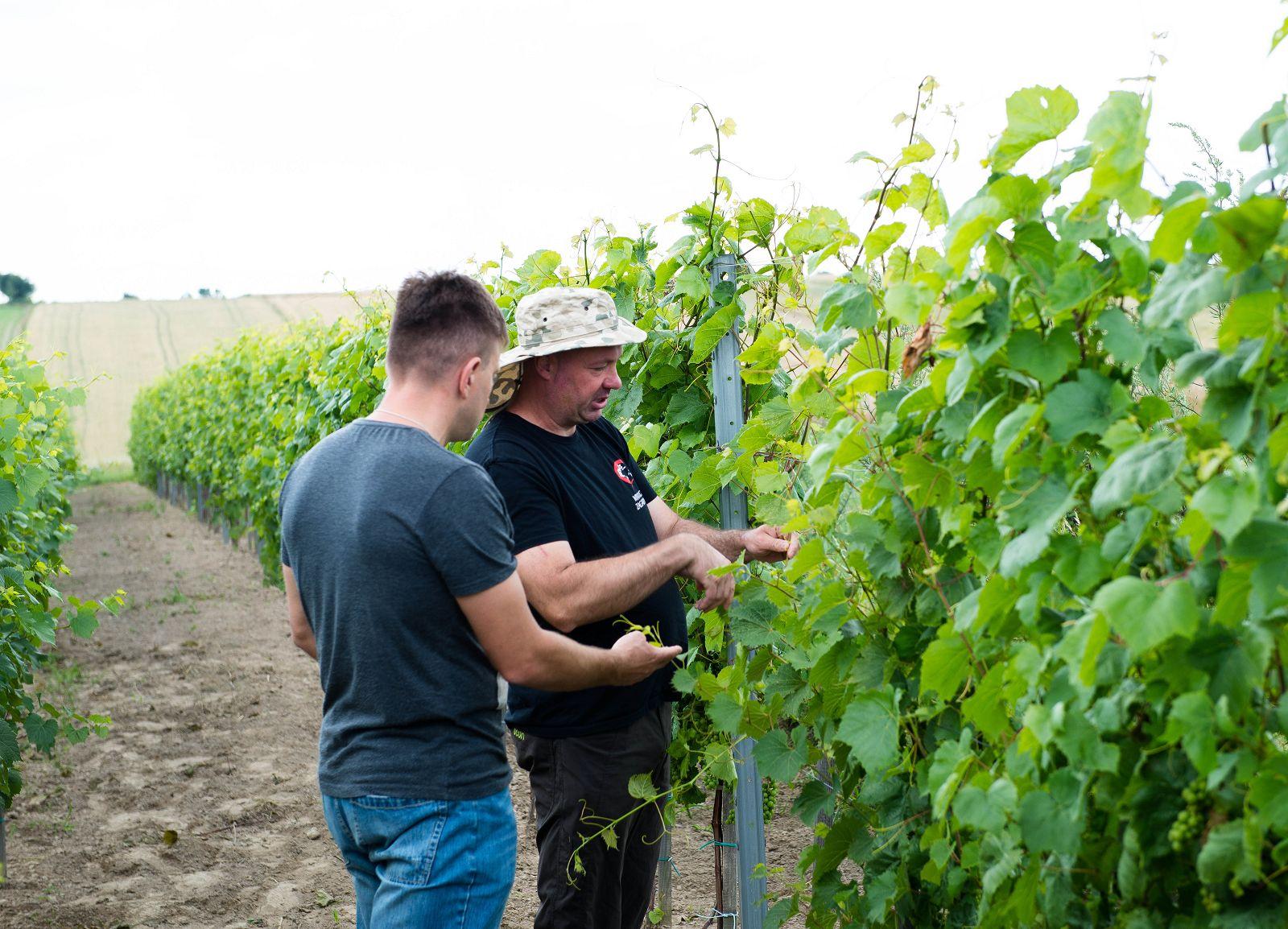 kurs uprawy winorośli kraków