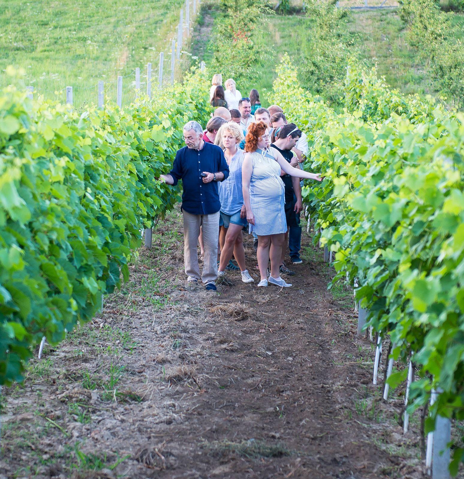 zwiedzanie, spacer, odwiedziny, winnicy, winnica, wino, kraków małopolska, jura, jurakrakowska