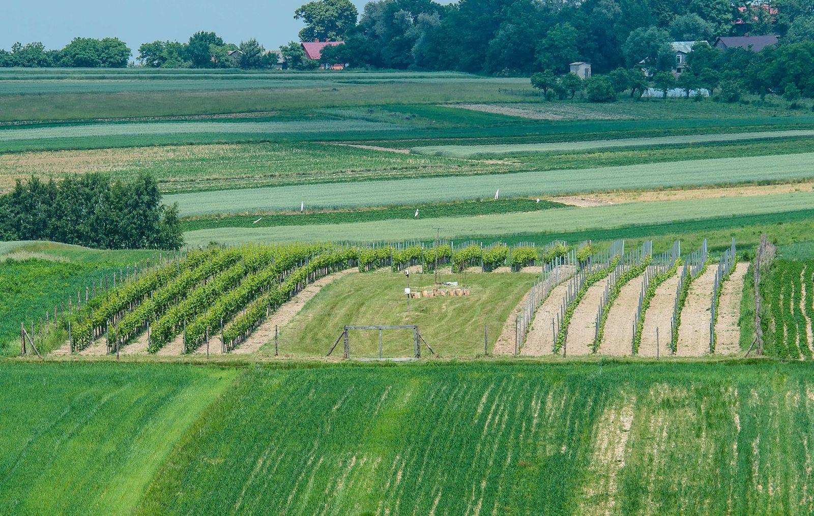 winnica, panorama, widok, krajobraz, wino, małopolska, jura, jurakrakowska, ojców